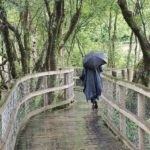 Glendalough walkway in the rain