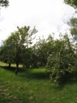 Orchard - 10 July 2020