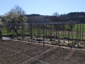 Potager and rebuilt fruit cage